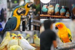มหกรรมคนรักนก สุดยิ่งใหญ่แห่งปี ครั้งที่ 6