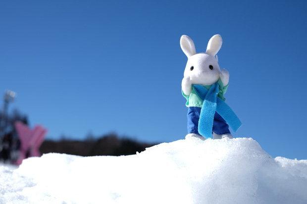 กระต่ายน้อยซิลวาเนี่ยนมาเล่นหิมะ