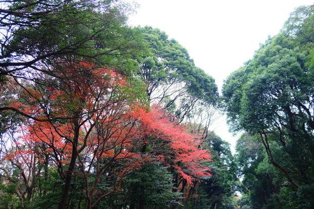 ภายใน ศาลเจ้าเมจิ ญี่ปุ่น