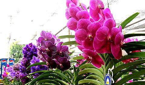 งานแสดงไม้ดอกไม้ประดับ ลพบุรี