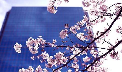 """""""โตเกียว"""" เมืองท่องเที่ยวยอดนิยมแห่งปี"""