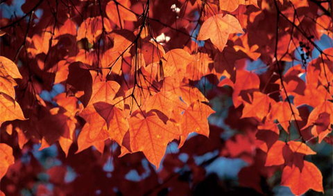 ท่องป่าปิด ชมเมเปิ้ลเปลี่ยนสี ที่ภูกระดึง