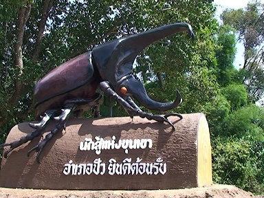 เทศกาลโลกของกว่าง นักสู้แห่งขุนเขา ประจำปี 2554