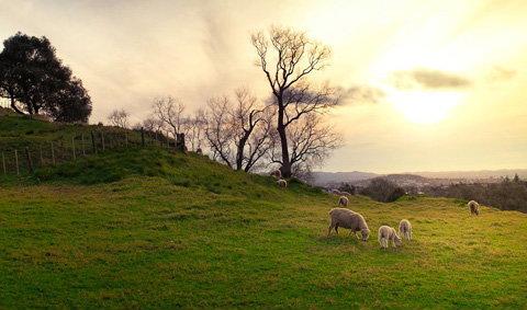 นิวซีแลนด์ ธรรมชาติดุจภาพเขียนบนดินแดนสวรรค์