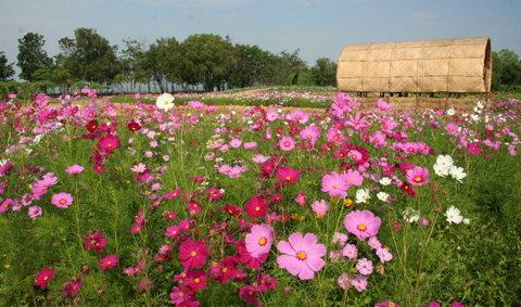 สัมผัสงานศิลปะและทุ่งดอกไม้ในสายลมหนาว 2554