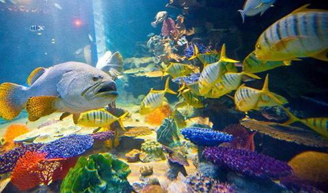 เชียงใหม่ ซู อะควาเรียม The Chiang Mai Zoo Aquarium