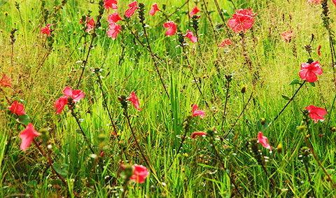 เลาะเลียบริมโขงในวันทุ่งดอกไม้บาน