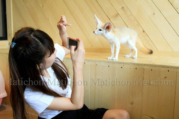 """""""คาเฟ่หมาจิ้งจอก"""" ฉีกแนวคาเฟ่หมา-แมว ลูกค้าแน่นแห่เล่นกับสัตว์น่ารักแปลกตา"""