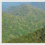ผืนป่าอุดมสมบูรณ์เมื่อมองจากเขาเจ็ดยอด
