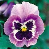 งานพืชสวนโลก เชียงใหม่ 2554