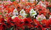 ทุ่งดอกทานตะวัน/ ไม้ดอกเมืองหนาว/ ดอกทิวลิป มาแล้ววววว!!!!!