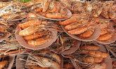 เทศกาลกินกุ้ง กินปลา เจ้าพระยาชัยนาท
