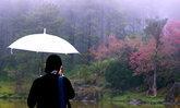 ชมดอกพญาเสือโคร่งที่ขุนวาง เวอร์ชั่นไม่กลัวฝน