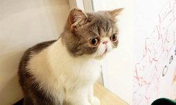 """""""เมี้ยวๆ"""" ไปนั่งเล่นเพลินๆ ในวันว่างๆ ที่ Cat up cafe คาเฟ่แมวย่านสีลมกัน!!"""