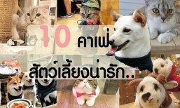 10 คาเฟ่สัตว์เลี้ยงน่ารัก เอาใจคนรักสัตว์