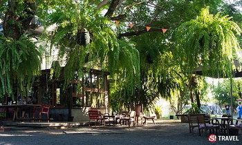 """""""บ้าน 1,000 ไม้"""" ร้านกาแฟในบ้านสวน ณ สามโคก"""