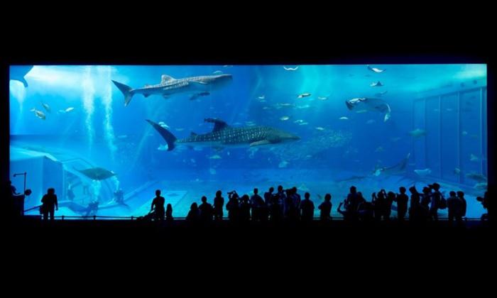 6 พิกัดอควาเรียมน่าไปแห่งเอเชีย! สุดยอดโลกใต้น้ำ 2018