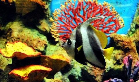 สถานแสดงพันธุ์สัตว์น้ำภูเก็ต Phuket Aquarium