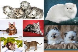 10 อันดับแมวน่ารักน่าเลี้ยง