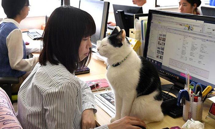 การให้นำสัตว์เลี้ยงมาที่ทำงาน มีส่วยช่วยลดความเครียด และเพิ่มประสิทธิภาพการทำงาน