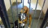 สุนัขรอดจากถูกฆ่า หลังกระแสแชร์ภาพเจ้าตูบกอดกัน