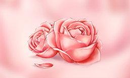 ที่มาของ Rose Hip Oil…จากกลิ่นหอม สู่ตัวช่วยเรื่องความงามของผู้หญิง