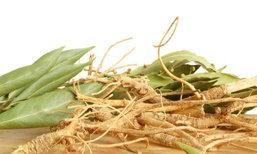 โสม (Ginseng) ประโยชน์ สรรพคุณของโสม