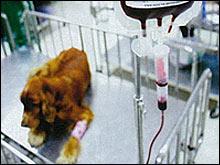 หน่วยฉุกเฉิน โรงพยาบาลสัตว์เล็ก คณะสัตวแพทยศาสตร์ จุฬาฯ