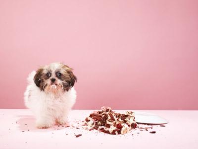 ความอ้วนในสัตว์เลี้ยงแสนรัก