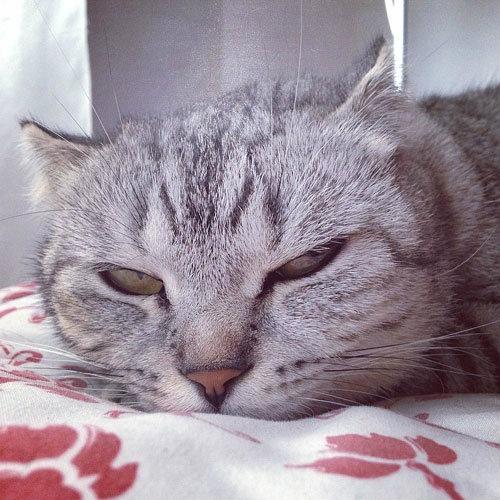 ทูลหัวของบ่าว หลากสายพันธุ์น่ารัก ของแมวเซเลบฯ