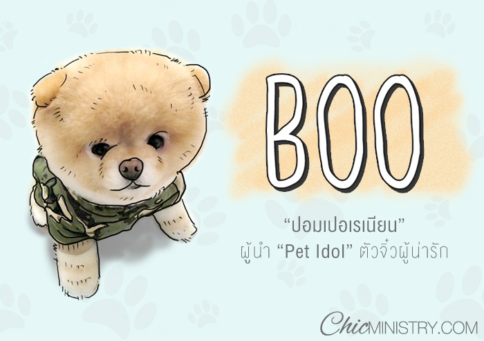 """""""Boo"""" Pet Idol ที่น่ารักที่สุดในโลก"""