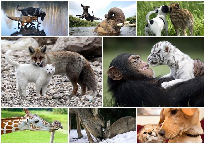 15 ความรักแบบ Cute Cute ของสัตว์โลกต่างสายพันธุ์