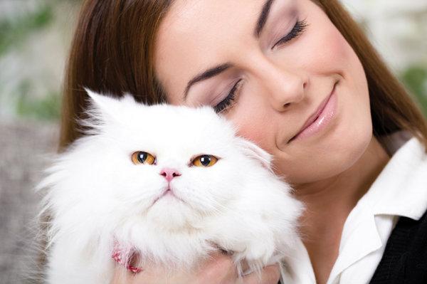 ทาสแมวอ่านเลย…ผลวิจัยเผยความคิดของแมวเหมียวต่อเจ้าของ