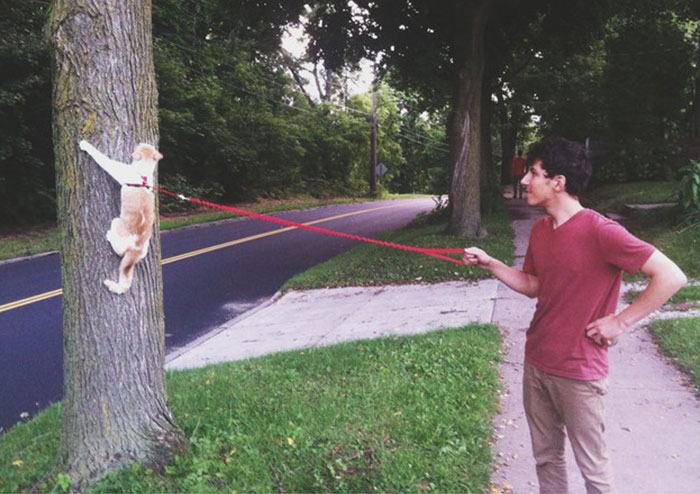 17 ภาพ Cat Walks ที่คุณต้องฮากรามค้าง