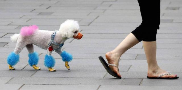 ชาวจีนสุดเหงา! หันเลี้ยงสุนัขควักเงินดูแลไม่อั้น