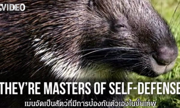 เรื่องมหัศจรรย์ของสัตว์ 6 ชนิดที่คุณอาจไม่รู้