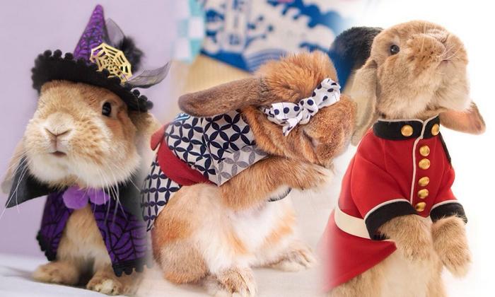 กระต่ายน้อยแสนรู้ น่ากอด น่าฟัด! เห็นแล้วต้องตกหลุมรักจริงๆ