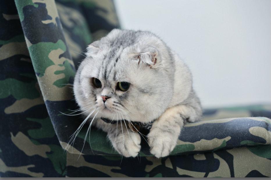 3 แมวทรงอิทธิพลของโลกที่มีเจ้าของเป็นคนไทย