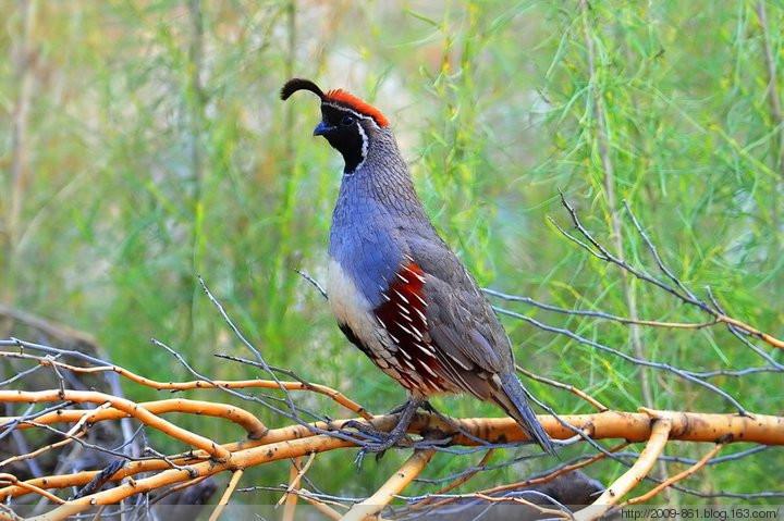 สุดยอด นกสวย ที่หาดูได้ยาก จากจีน