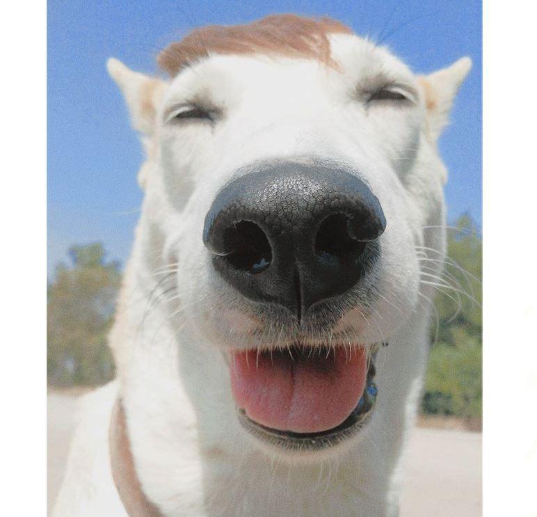 """""""กลูต้า-กอลลั่ม"""" สุนัขที่ว่ากันว่า มีความสุขที่สุดในโลก"""