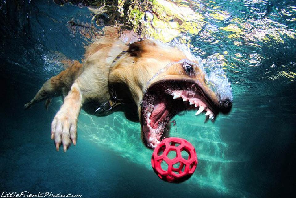 ช็อตหายาก! ชมภาพเด็ด เมื่อน้องหมากระโดดงับลูกบอลใต้น้ำ